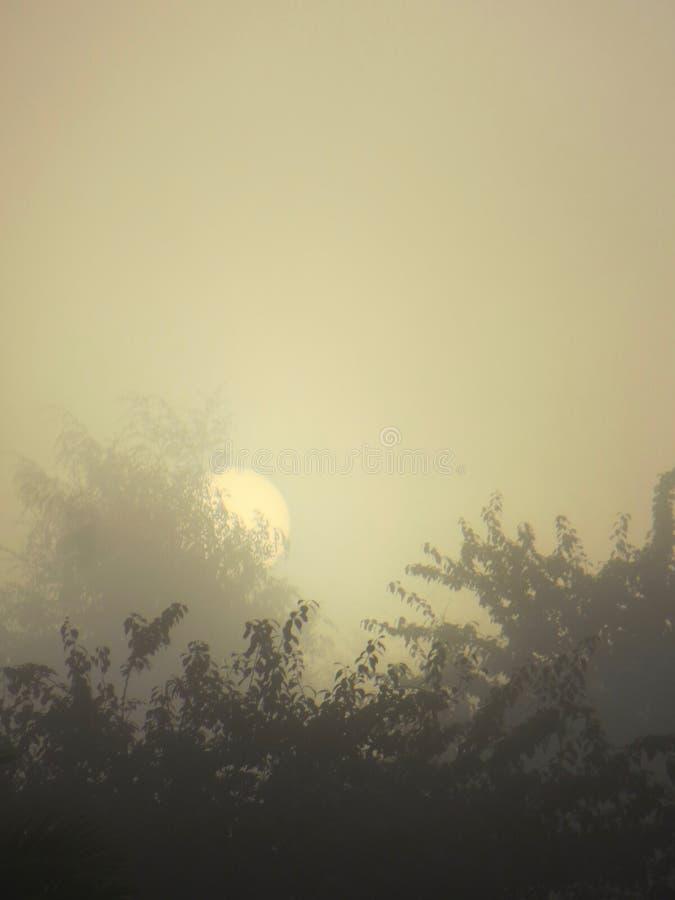 Misty Sunrise sobre árvores foto de stock