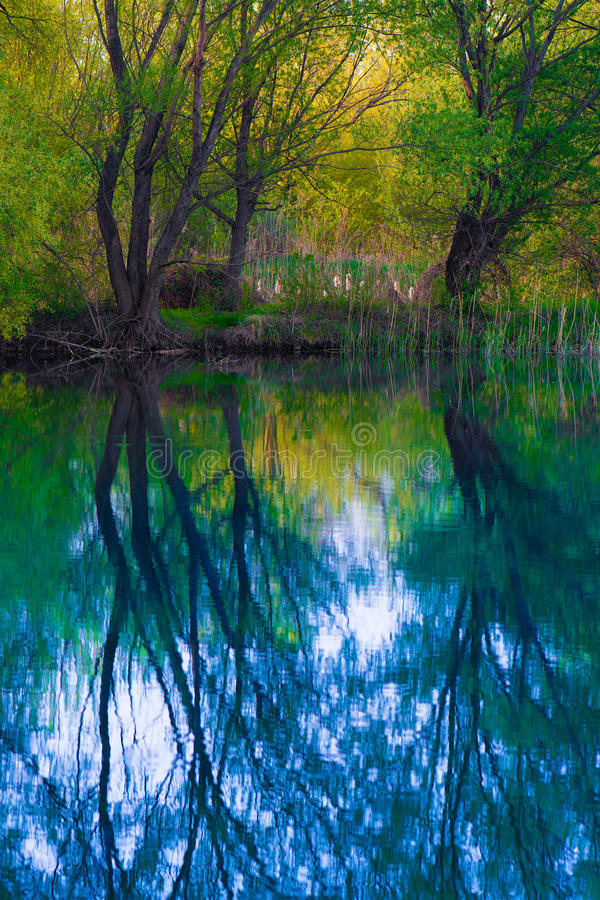 Download Misty Swamp Lake stock photo. Image of mystic, swamp - 39769800