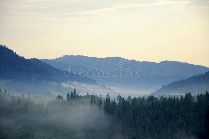 Misty tree on the mountain slope in a nature . Tree on the mountain slope in a nature reserve stock images