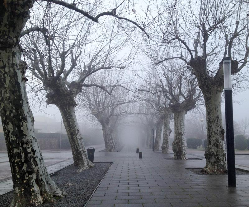 Misty tree tunnel spooky path royalty free stock photography