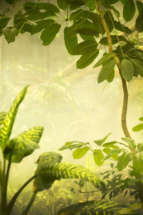 Misty Tropical Jungle Background Scene photos stock