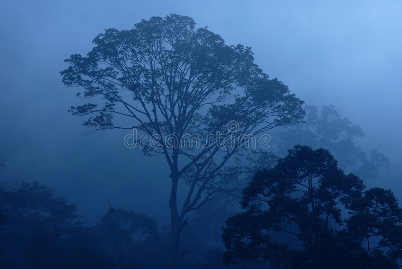 Misty tropical rain forest stock photo