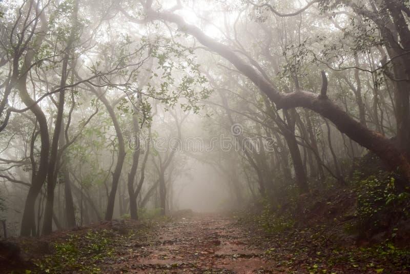 Misty walkways of matheran hill station during monsoon. Matheran is a beautiful hill station nestled sahyadri range of western ghat stock photo
