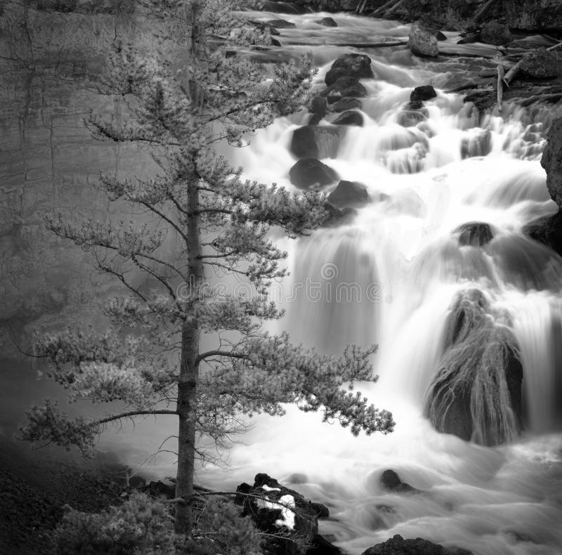Misty Waterfall Water Cascade Down Rocks with Pine Tree. Misty waterfall water cascade cascading down rocks river creek with pine tree royalty free stock images
