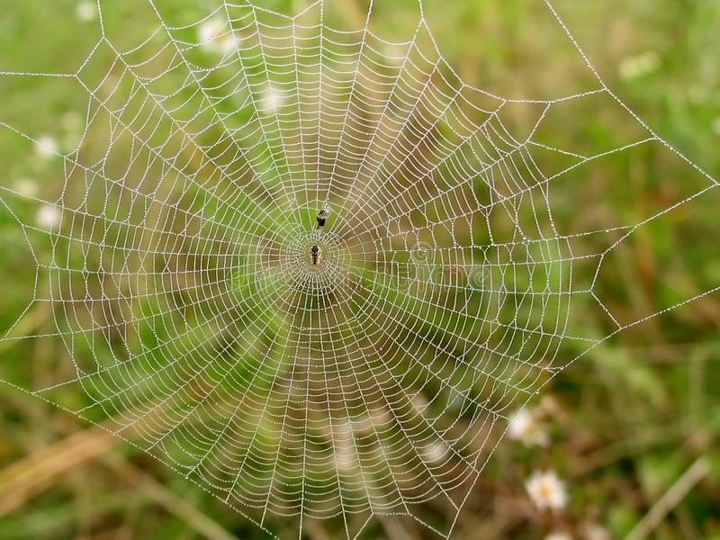 Download Misty Web stock image. Image of green, abstract, spider - 265757