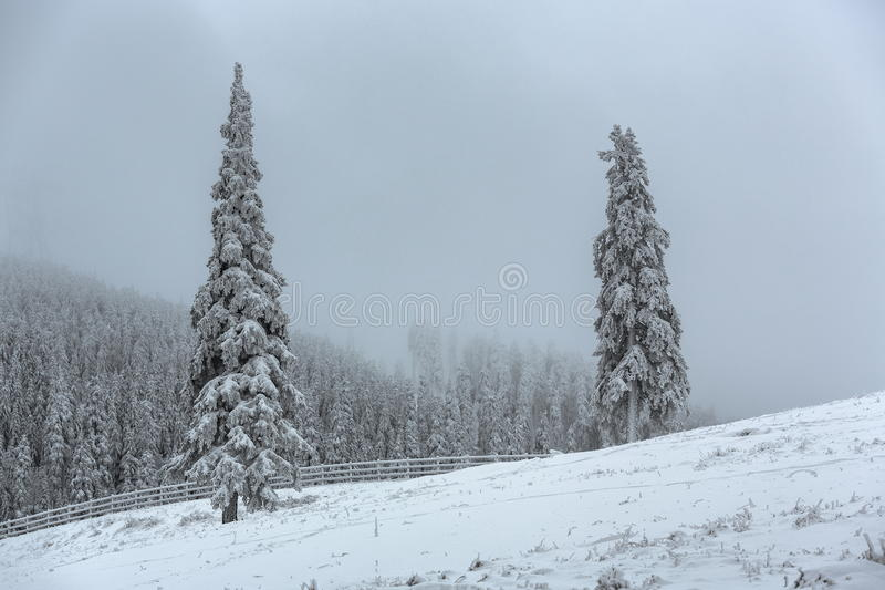 Misty winter landscape. Peaceful winter landscape with snow covered spruce trees and wooden enclosure on a gray dismal misty morning stock photo