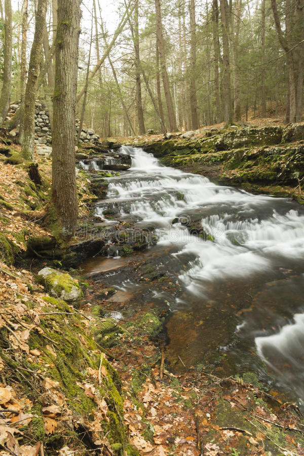 Download Misty Woodland Waterfall stock foto. Afbeelding bestaande uit bomen - 54092088