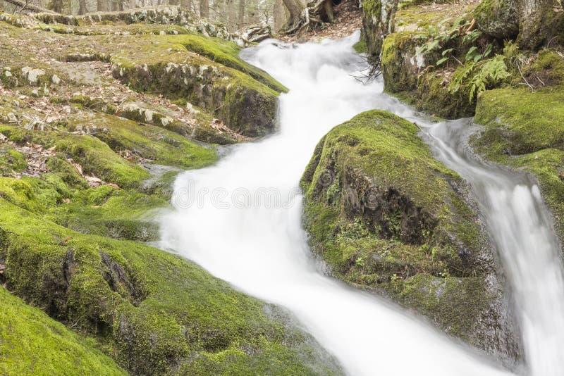 Download Misty Woodland Waterfall stock foto. Afbeelding bestaande uit langzaam - 54092134