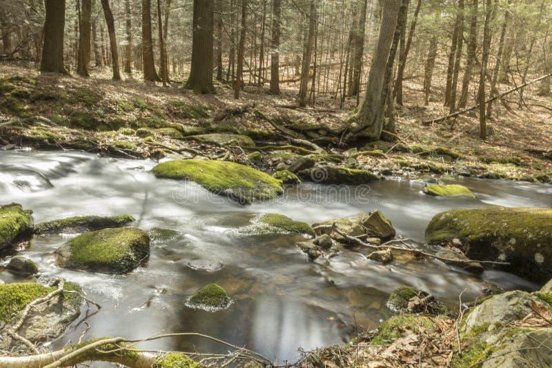 Download Misty Woodland Waterfall stock foto. Afbeelding bestaande uit langzaam - 54092144
