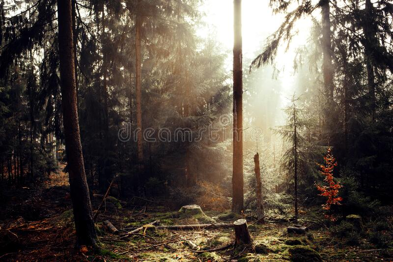 Misty Woodlands fotografia de stock royalty free