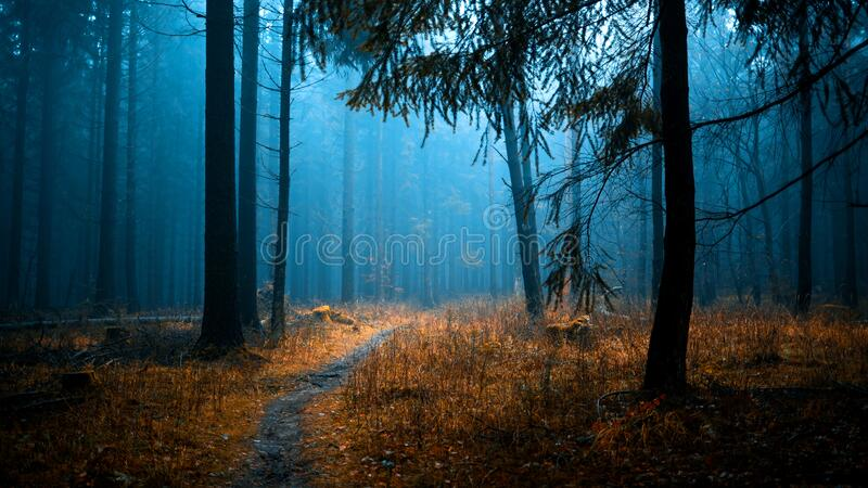 Misty Woodlands imagem de stock royalty free
