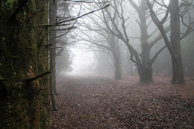 Misty Woods stock photos