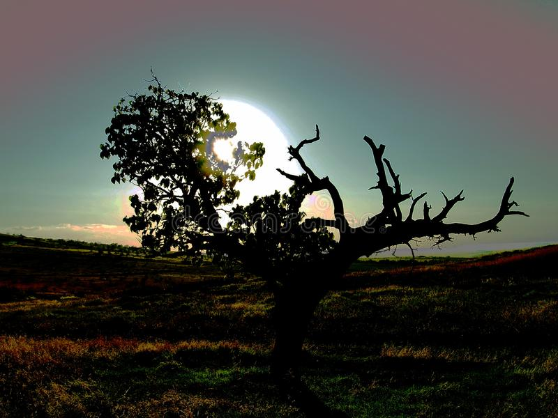 Mistyczki pojedynczy drzewny przyrodni utrzymanie obrazy stock