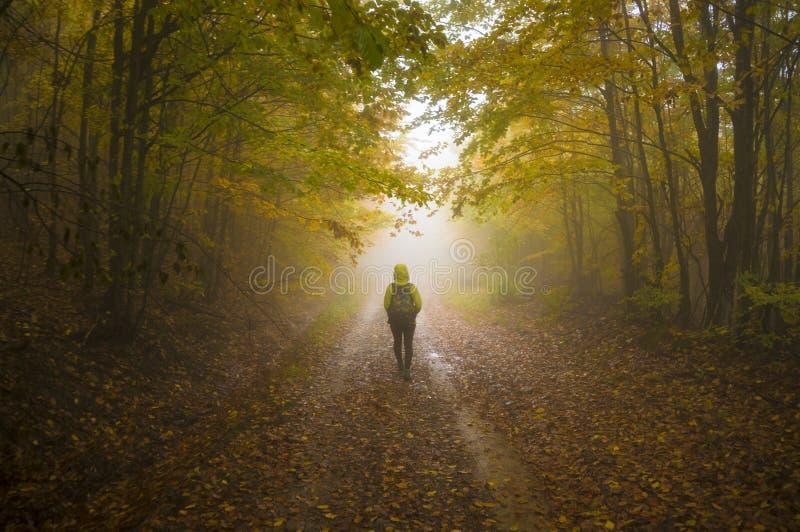 mistyczna ścieżka zdjęcia royalty free