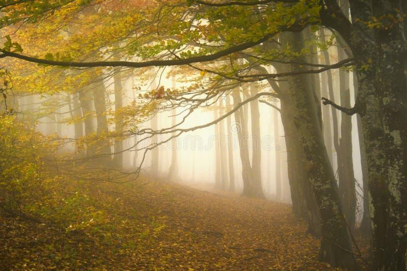 mistyczna ścieżka zdjęcie royalty free