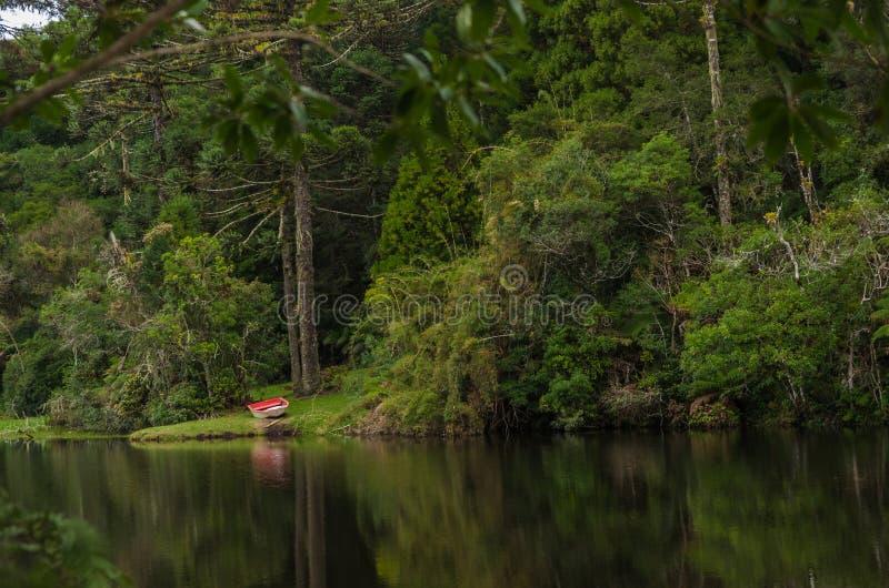 Mistyczne zielone lasy Brazylii, błotny grunt zdjęcie stock