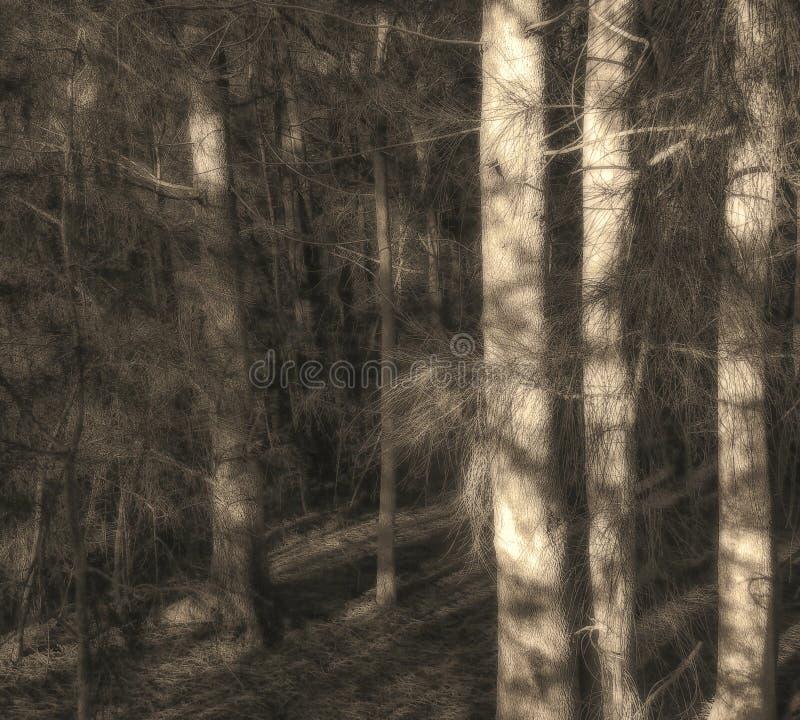 Mistyczni drzewa w ranku zdjęcia stock