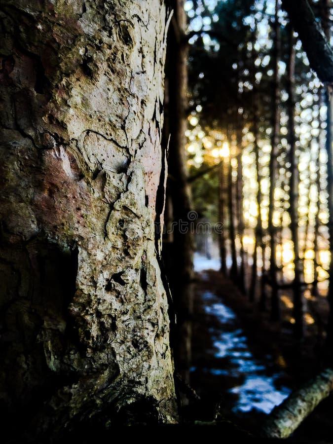 mistyczni lasu obrazy royalty free