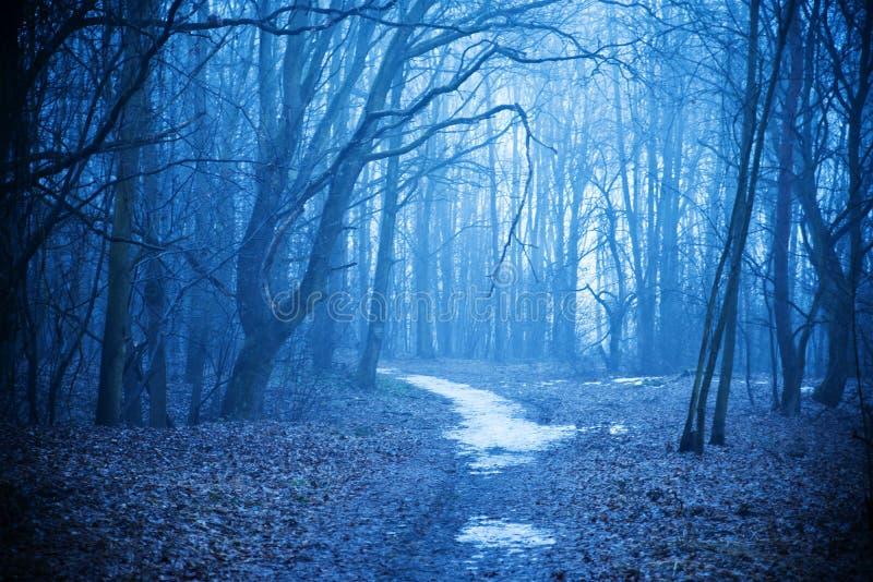 Mistyczny jesień las z śladem w błękitnej mgle Piękny krajobraz z drzewami, ścieżka, mgła w kontekście niebieskie chmury odpowiad obrazy royalty free
