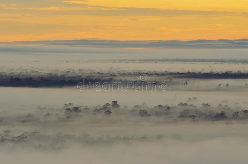 Mistyczny las na ranku czasie obraz stock