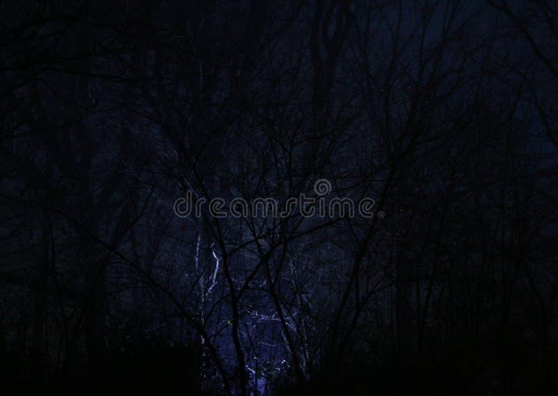 Mistyczny lekki jaśnienie w drewnach w nocy fotografia royalty free