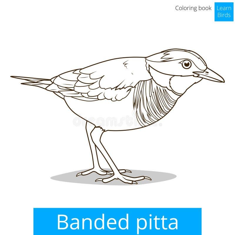 Mit einem Band versehener pitta Vogel lernen Vogelmalbuchvektor lizenzfreie abbildung