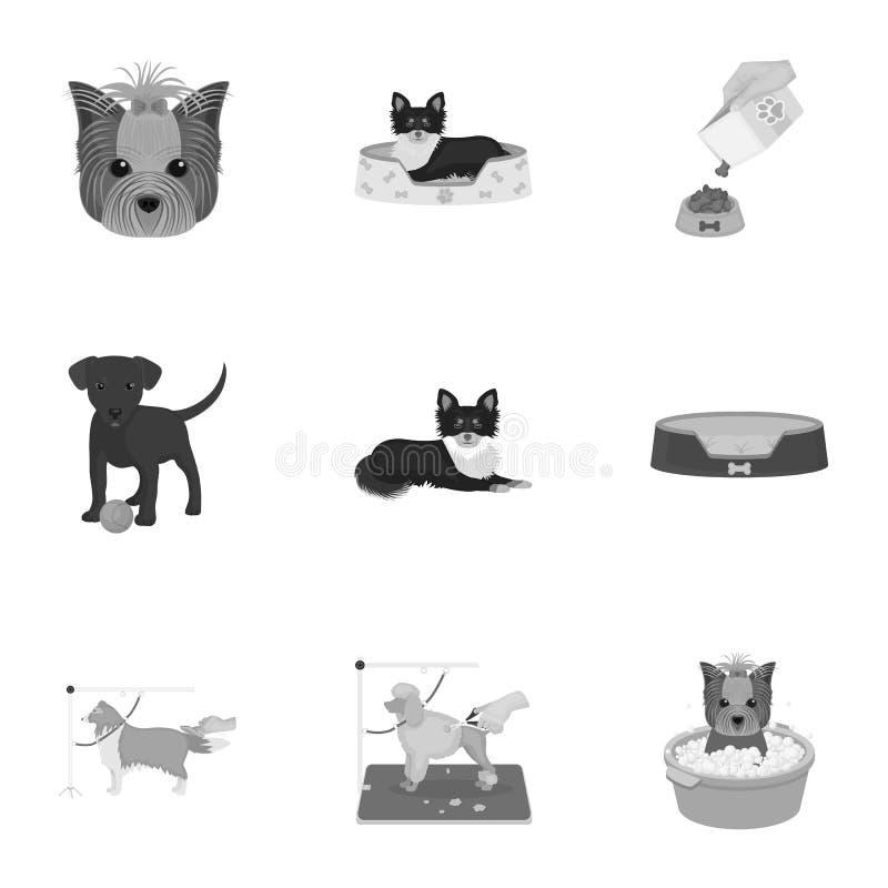 Mit einem Hund gehen, eine Tierarztklinik, ein Hundehaarschnitt, ein Welpenbaden, ein Haustier einziehend Tierarztklinik und gese vektor abbildung