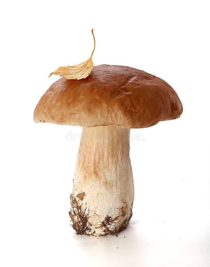 Mit einer Kappe bedeckter Pilz lizenzfreies stockbild