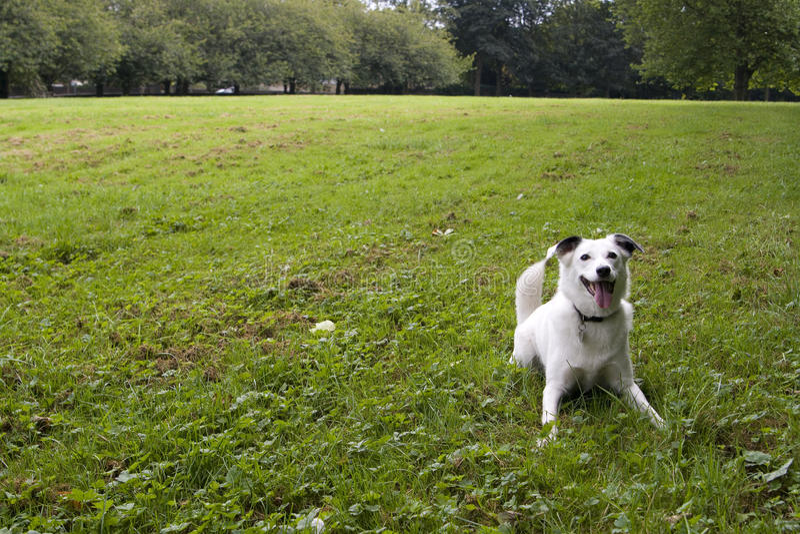 Mit leuchtenden Augen weißer Hund lizenzfreies stockfoto