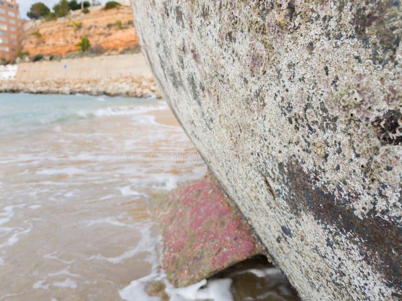 Mit Meereslebewesen die Oberfläche der Unterseite eines s überwältigt stockbild