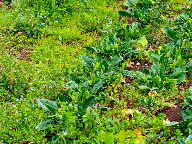 Mit natürlichen Methoden angebautes Gemüse im italienischen Landland lizenzfreie stockfotografie