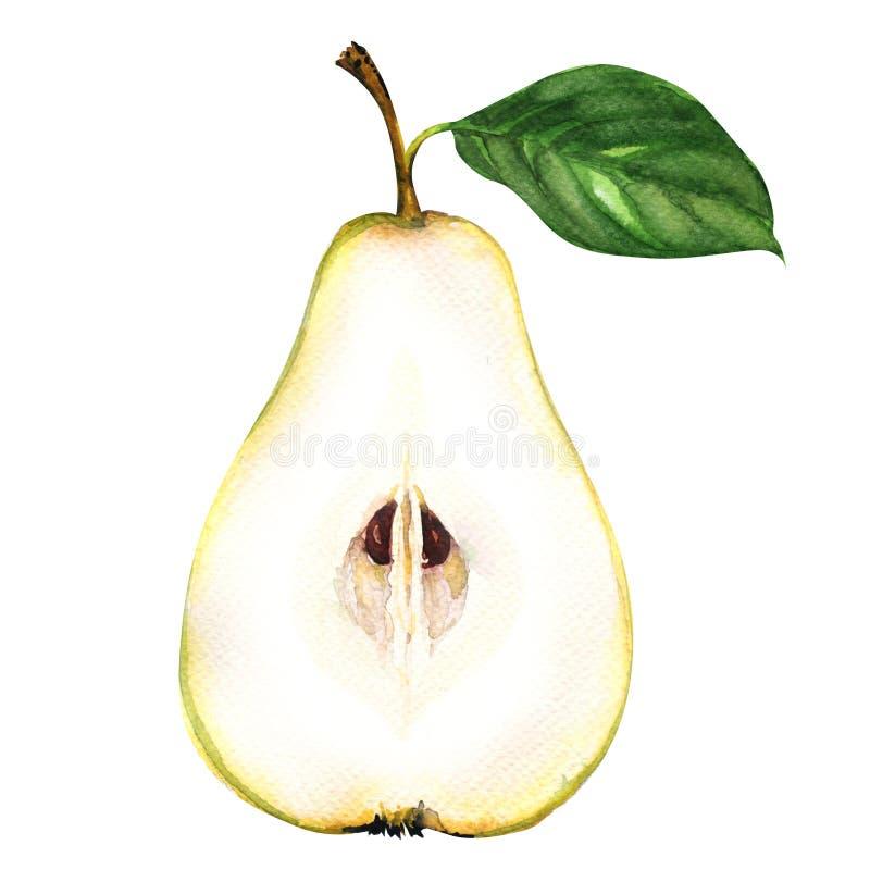 Mitad amarilla cortada fresca de la pera aislada en el fondo blanco ilustración del vector