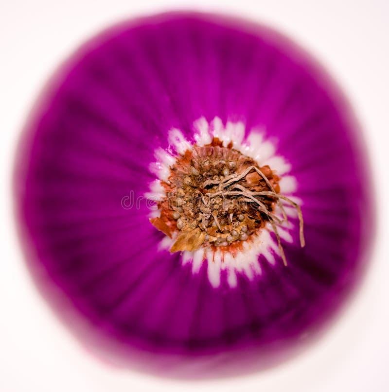 Mitad de la cebolla roja desde arriba fotografía de archivo libre de regalías