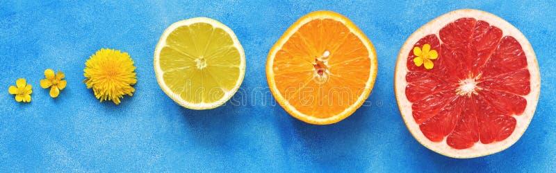 Mitades de diversos agrios en un fondo azul adornado con las flores de la primavera Lim?n, pomelo, naranja Visi?n desde arriba imagenes de archivo
