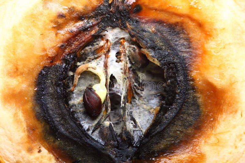 Mitades putrefactas de la manzana del primer. Residuos orgánicos. imagen de archivo libre de regalías