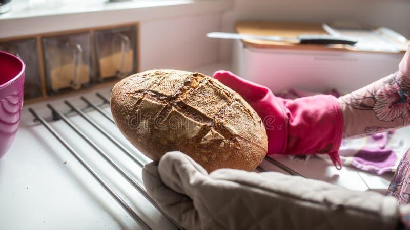 Mitaines de port de cuisine de femme tenant le pain frais chaud image stock