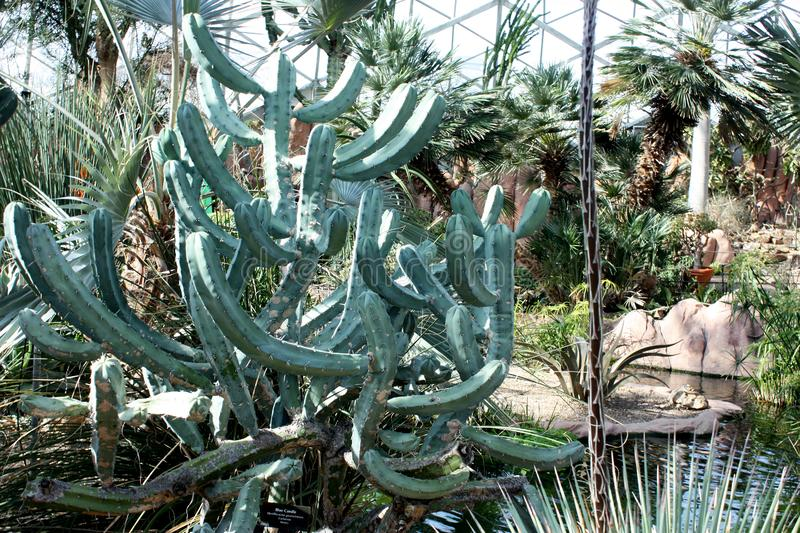 Mitchell Park Horticultural Conservatory, Milwaukee, Wisconsin fotografia stock