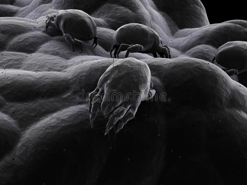 Mite Stock Images