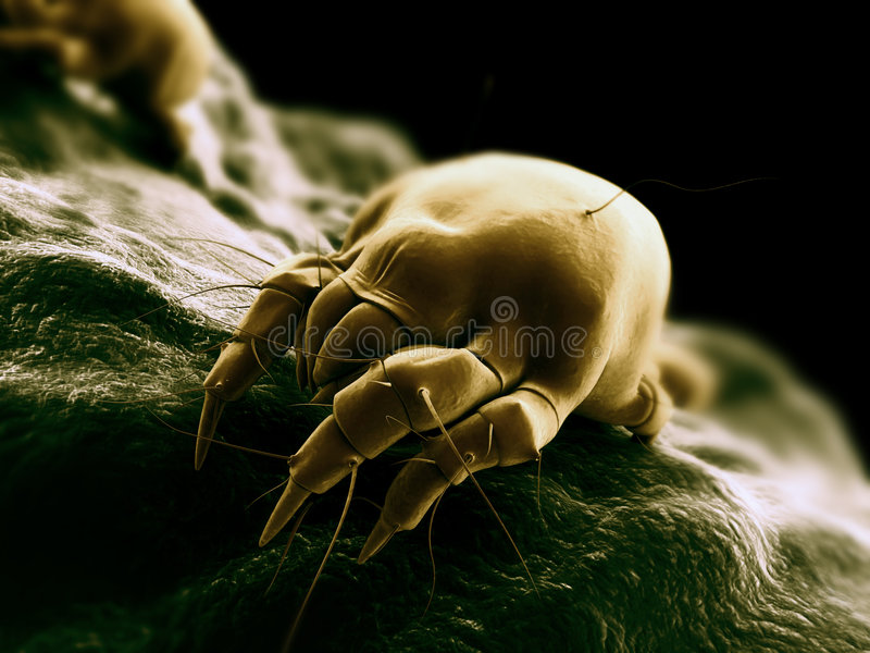 Mite scene stock illustration