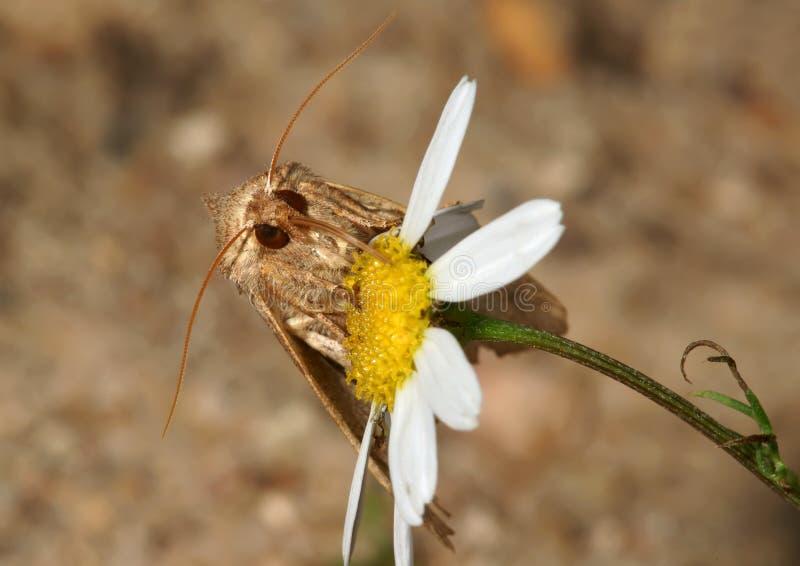 Mite sur une fleur photos stock