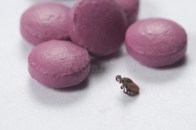 Mite and tablets. Macro shot local focus royalty free stock photos