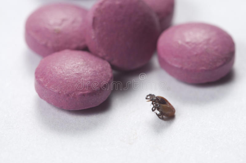 Mite and tablets. Macro shot local focus royalty free stock images