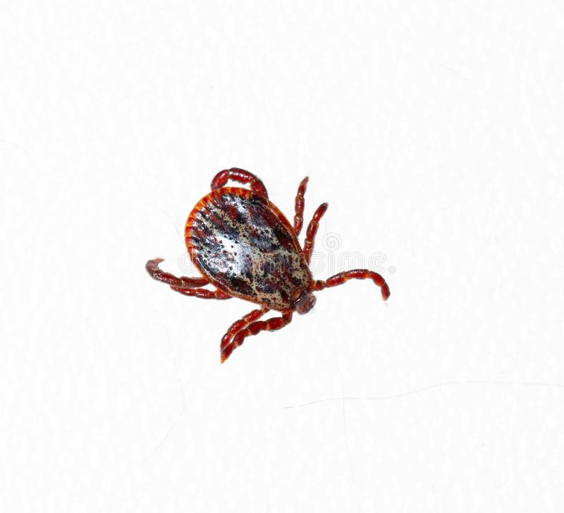 Gray tick on a white background.  royalty free stock image
