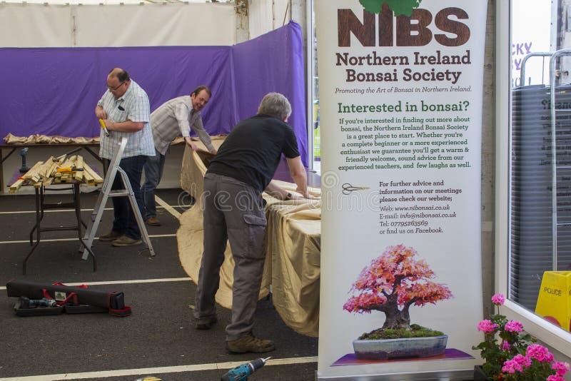 Mitglieder der Nordirland-Bonsai-Gesellschaft, die ihre Ausstellungsstände für das Belfast-Frühlingsfest an Barnett-` s Demesne e stockfotografie