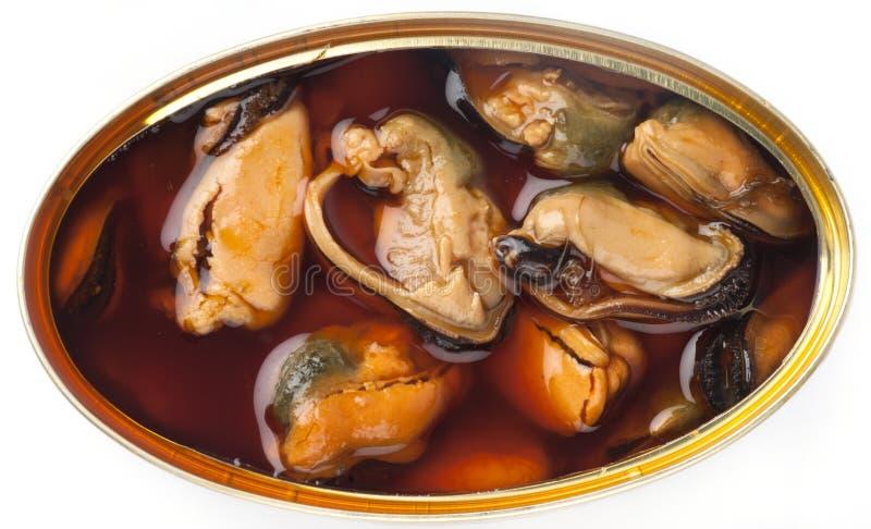 Mitili in scatola con salsa oleosa marrone. immagine stock libera da diritti