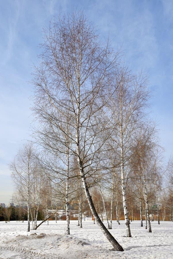 Mitino krajobrazu park w wczesnej wiośnie moscow Rosji zdjęcie royalty free