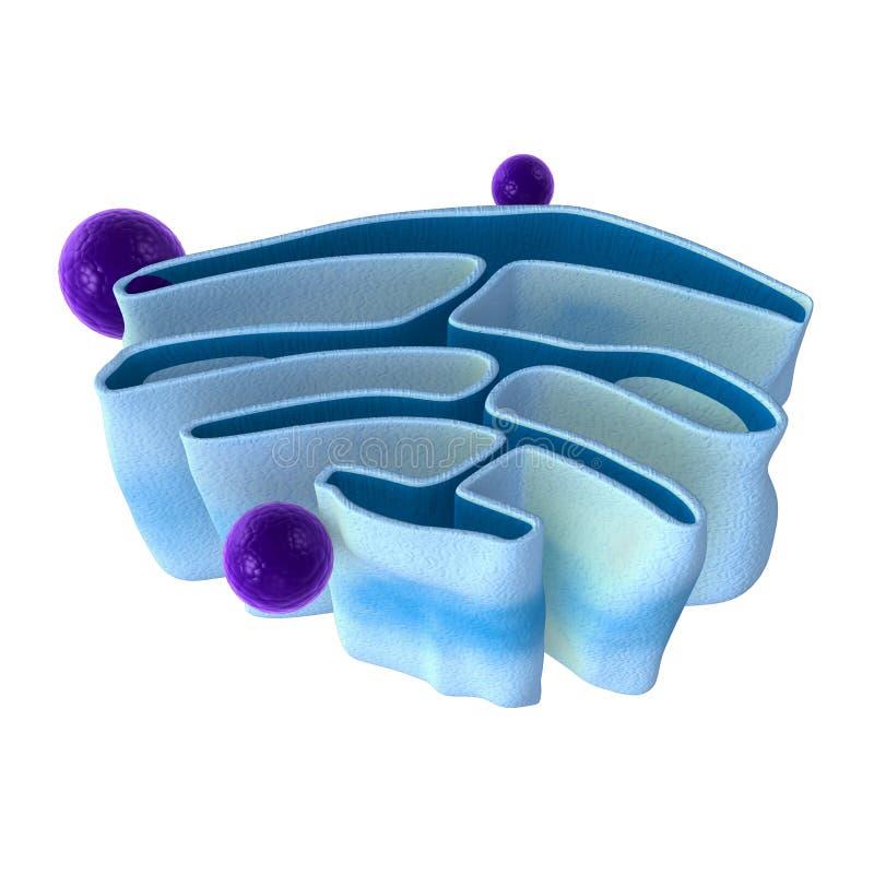 mitochondria arkivfoto