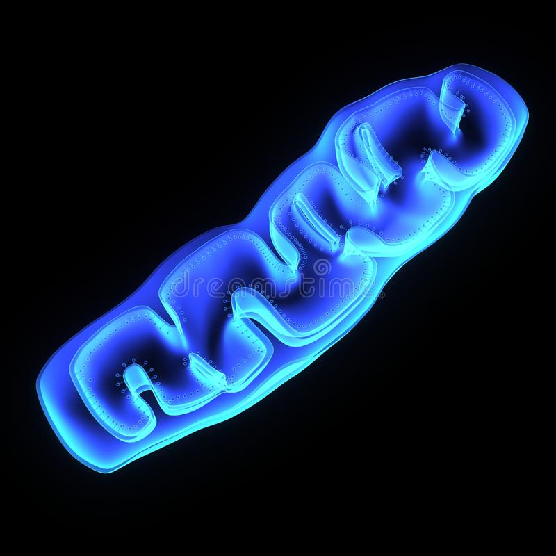 mitochondria royaltyfri illustrationer