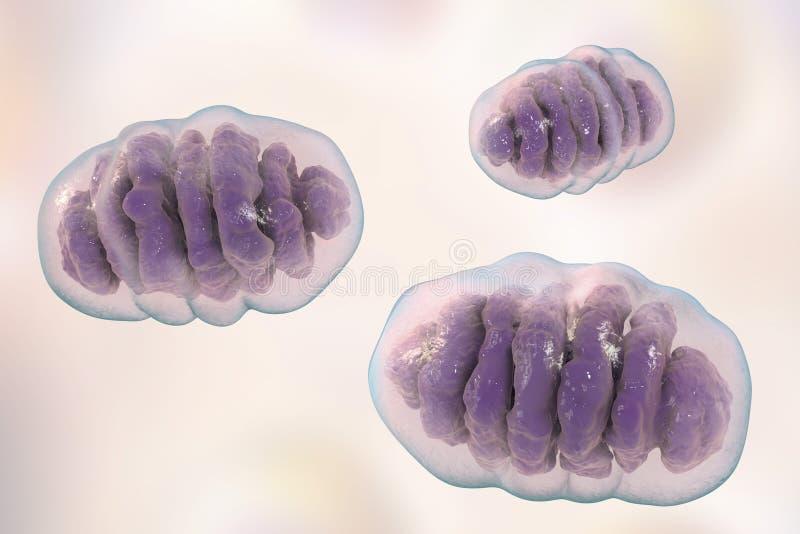 Mitochondrion, ogranelles cellulaires qui produisent l'énergie illustration stock