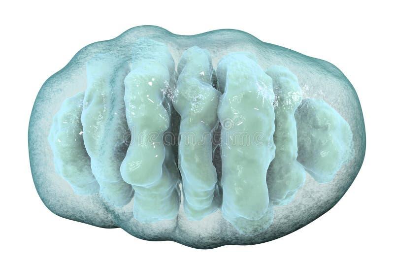 Mitocondrio, organelli cellulari che producono l'energia royalty illustrazione gratis